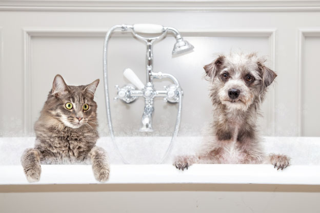 A dog and a cat in a bath tub